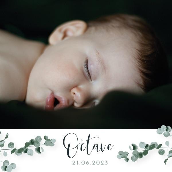 faire-part naissance photo branche eucalyptus fleur garçon